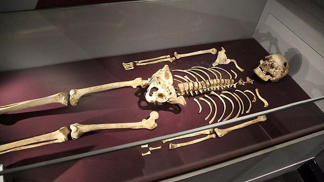 שרידי האיש מצ'דר במוזיאון להיסטוריה של הטבע