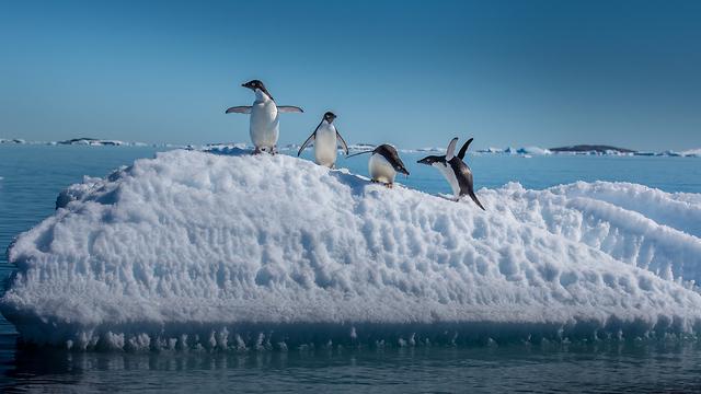 חושב כבר על הפינגוונים שבאנטרקטיקה (צילום: שאטרסטוק) (צילום: שאטרסטוק)