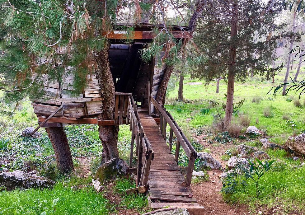 בית העץ הקסום (צילום: יעל לרנר) (צילום: יעל לרנר)
