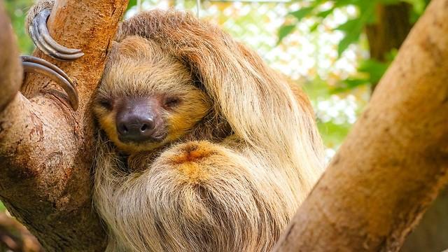 כל בעלי החיים עם מערכת עצבית זקוקים לשינה (צילום: shutterstock) (צילום: shutterstock)
