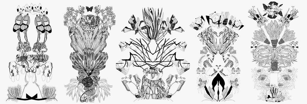 סקיצות של אור גלס לפרחים. בתחילה צילמה צמחים בשחור-לבן: ''האיורים הראשונים שלי דימו אותם כבניינים'' (סקיצה: אור גלס)