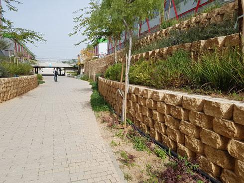 אבן משתלבת וצמחייה מדברית (צילום: אורן אלדר)