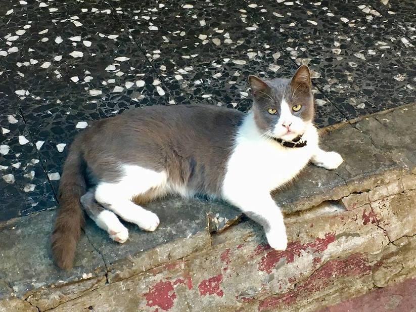 """jim, החתול של ברנוב שעל שמו נקראת המסעדה (צילום: יח""""צ)"""