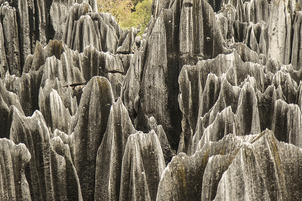 יער האבן (צילום: רון פלד) (צילום: רון פלד)