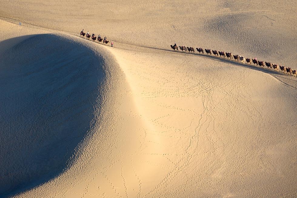 גמלים חוצים את הדיונות (צילום: שאטרסטוק) (צילום: שאטרסטוק)