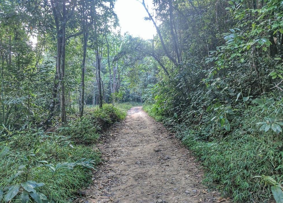 שבילי הליכה בטבע (צילום: נופר רונן) (צילום: נופר רונן)