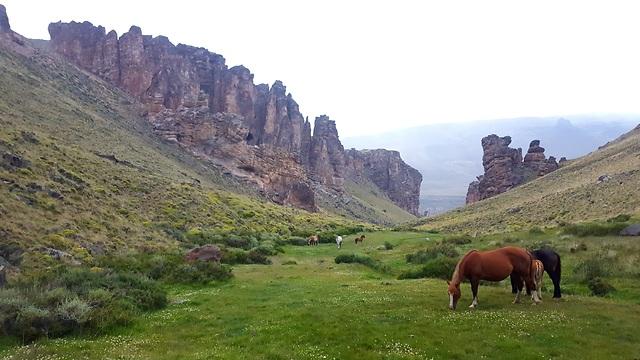 סוסים חופשיים  (צילום: סער יעקובוביץ) (צילום: סער יעקובוביץ)