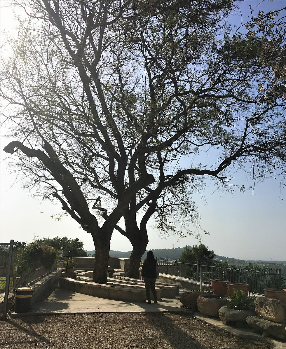 מרפסת המנזר (צילום: יעל לרנר) (צילום: יעל לרנר)
