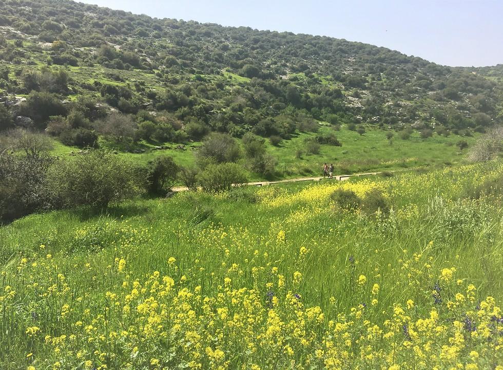 הנוף מגבעת התורמוסים (צילום: יעל לרנר) (צילום: יעל לרנר)