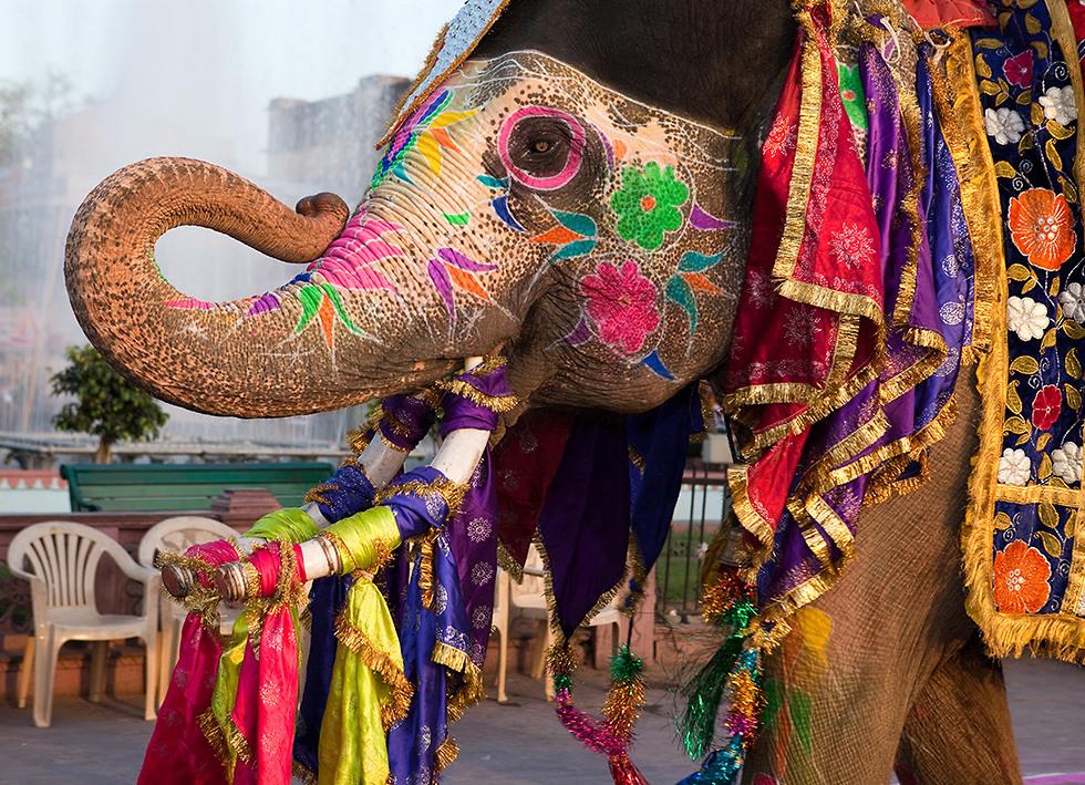 פסטיבל הפילים בג'ייפור (צילום: Depositphotos ) (צילום: Depositphotos )