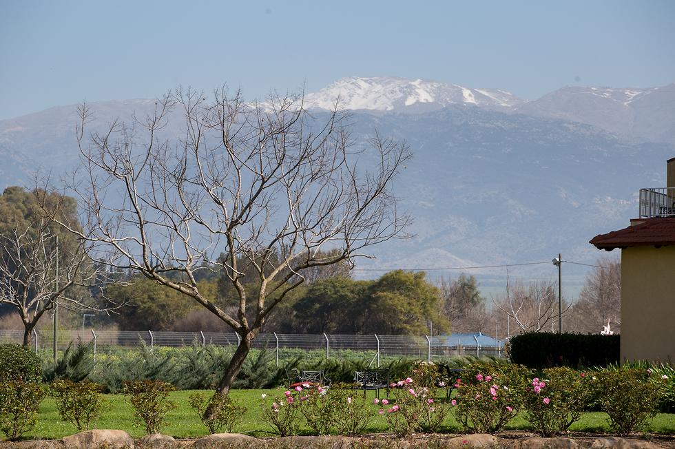 המדשאות במלון הפונות אל החרמון (צילום: דן ויץ) (צילום: דן ויץ)