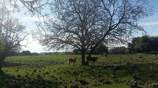 יער אודם (צילום: אוהד גיגי)