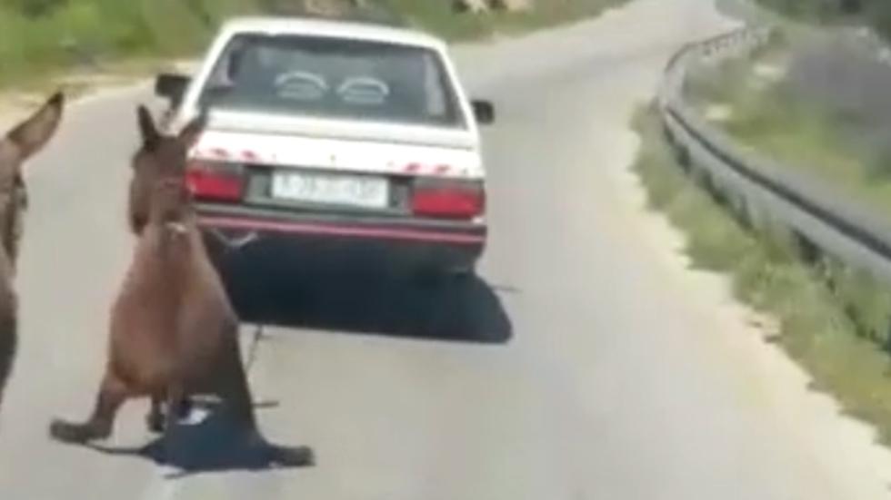חמור נגרר על ידי רכב בקריית ארבע (צילום: דוברות המשטרה)