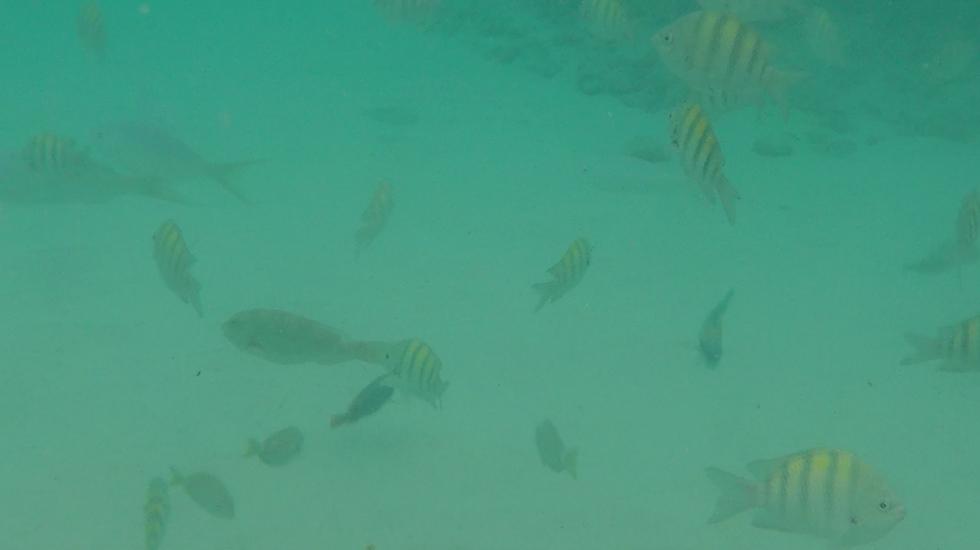 לצלול ולראות עולם אחר מתחת למים (צילום: אסף קוזין)