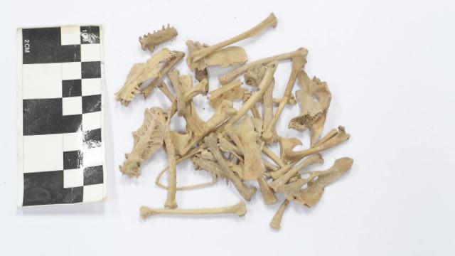 שרידים של יונים שחיו בנגב לפני 1,500 שנה (צילום: אוניברסיטת חיפה)