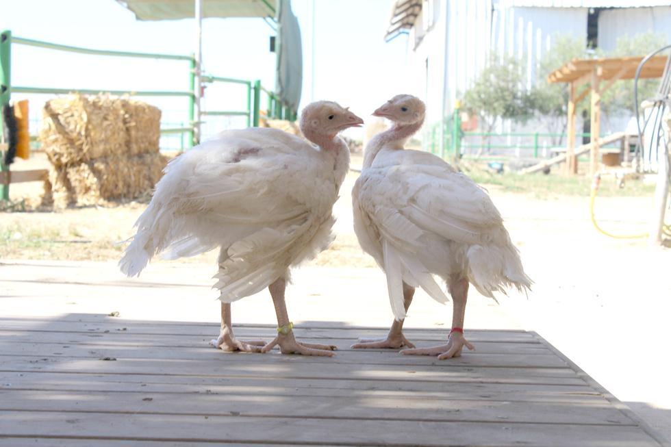 שי ואור דיירי חוות החופש (צילום: דניאלה מאירי)