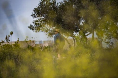 צבעוניות של צמחייה ארץ ישראלית (צילום: אלכס קולומויסקי)