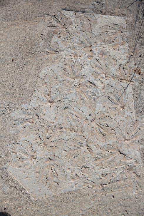 עלים הוטבעו בבטון, ולצידם משחקי גימטריה וחידות צורניות (צילום: אלכס קולומויסקי)