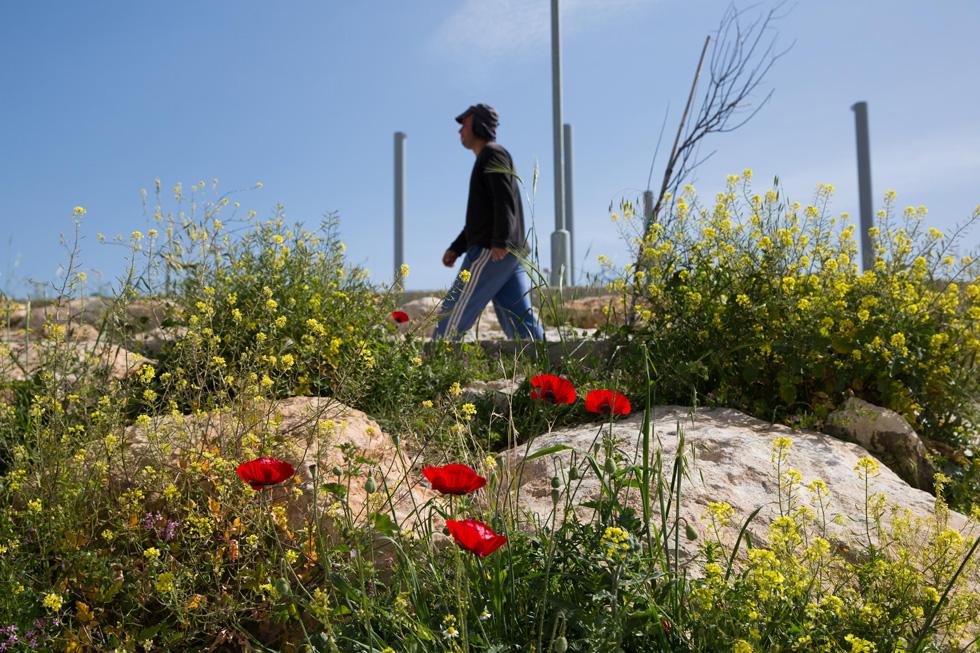 בחורף ובאביב, הפריחה משכרת. גם בקיץ אמור להיות כאן יפה מאוד (צילום: אלכס קולומויסקי)