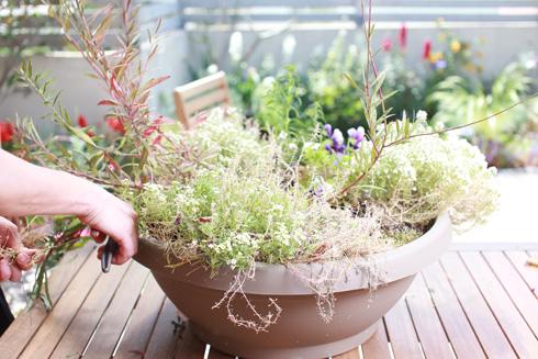 רוב הצמחים מתחילים עכשיו את עונת הצמיחה והגידול שלהם (צילום: אביגיל עוזי)