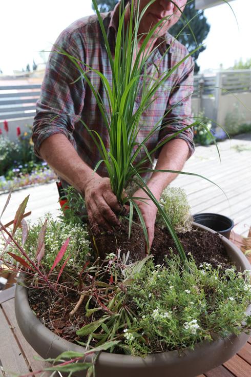 ודאו שאתם רוכשים צמחים שיתאימו לתנאים הקיימים במרפסת של (צילום: אביגיל עוזי)