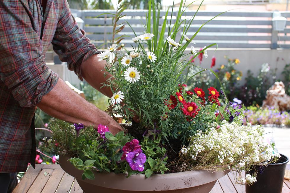 גשו למשתלה הסמוכה ופנקו את המרפסת שלכם בפרחים ובצמחים חדשים (צילום: אביגיל עוזי)