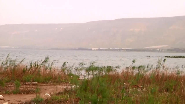 חוף הכנרת (צילום: שמיר אלבז)