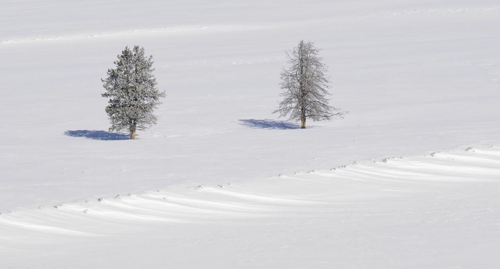עצים בשלג ביילוסטון (צילום: מיכה אורבך)