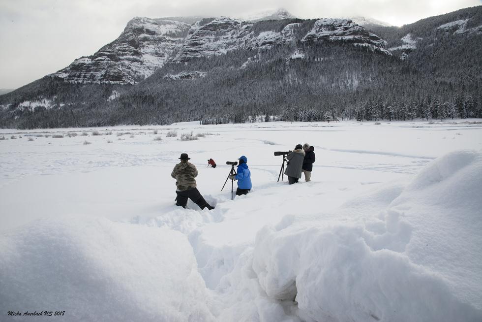 קבוצת צלמי הטבע בשלג ביילוסטון (צילום: מיכה אורבך)