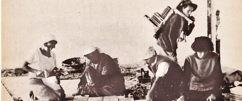 פועלות בתקופת קום המדינה (צילום: באדיבות אוסף ארכיון שיכון ובינוי)