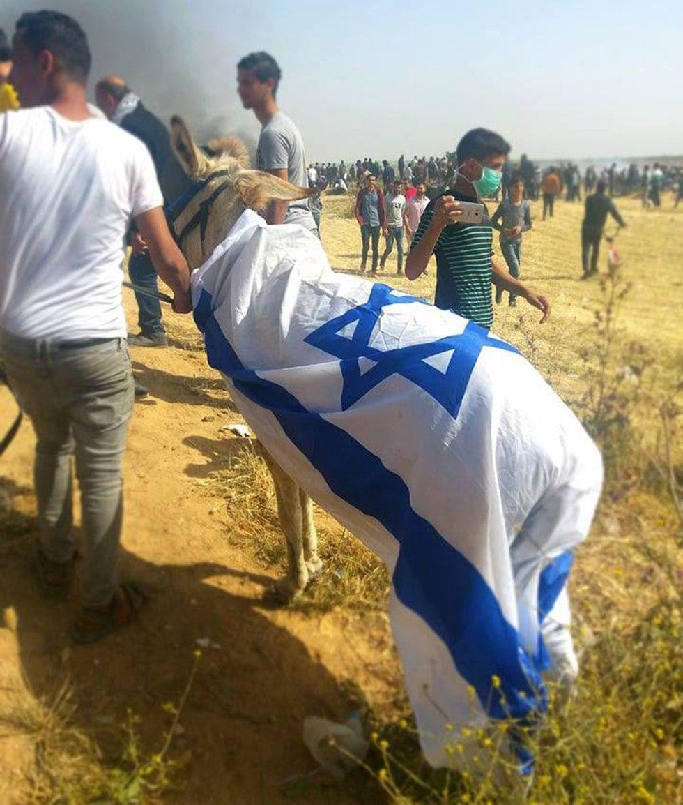 Donkey draped in the Israeli flag