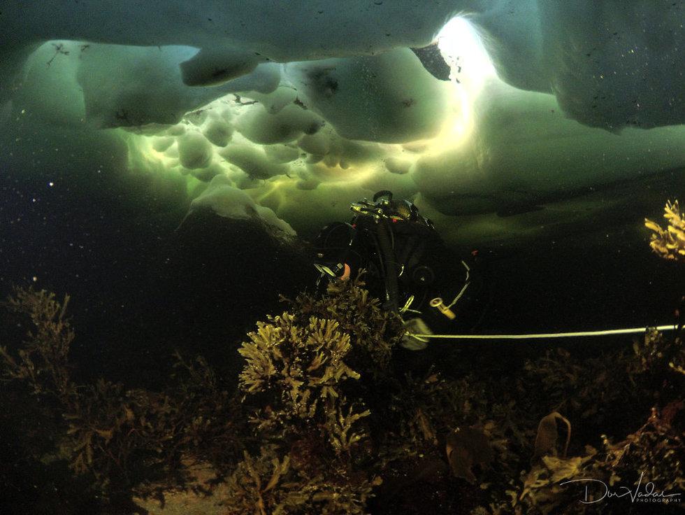 צלילה מתחת לקרח (צילום: דור ואדאס )