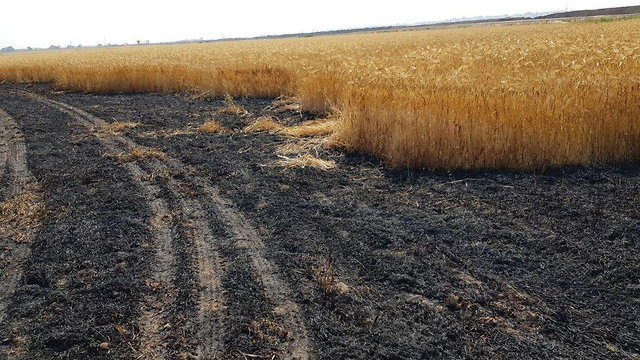 The burned wheat field in the Sha'ar HaNegev Regional Council