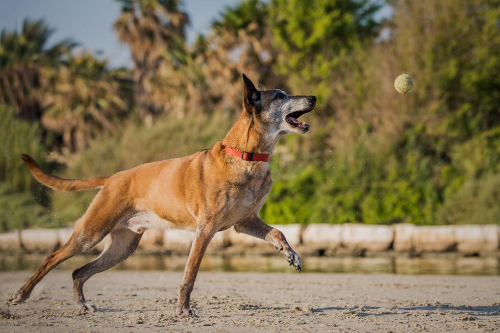 שאקל הכלב (צילום: אלינור רויזמן)