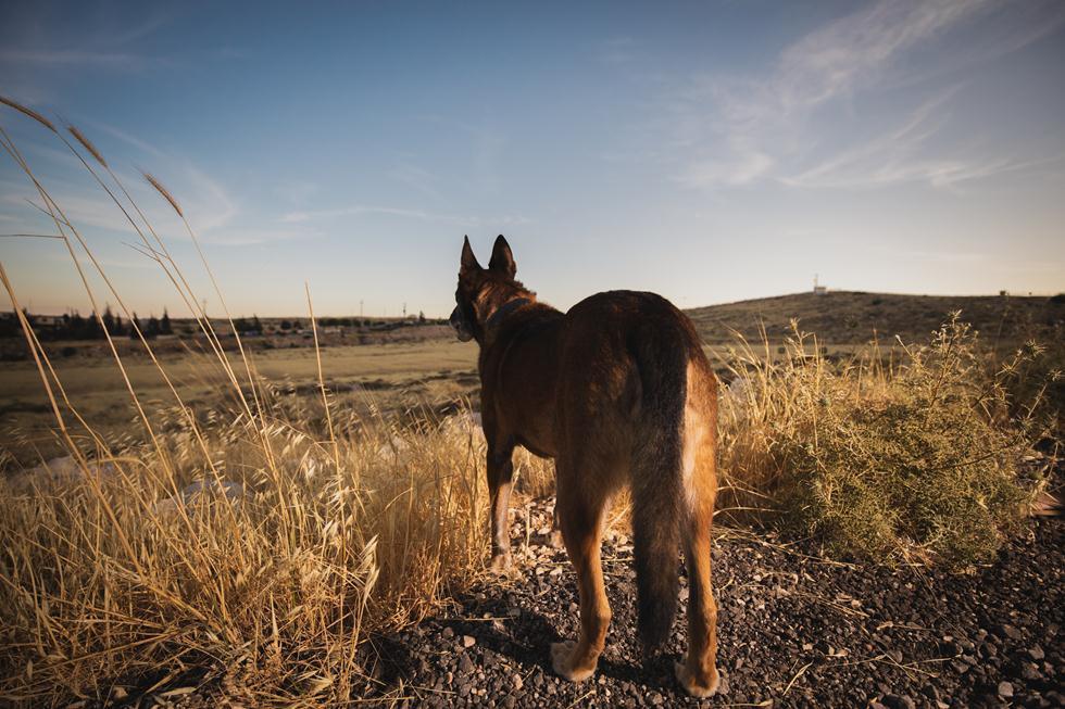 ויני הכלב (צילום: אלינור רויזמן)