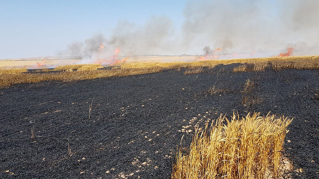 A Sha'ar HaNegev wheat field caught fire after a kite from Gaza landed on it