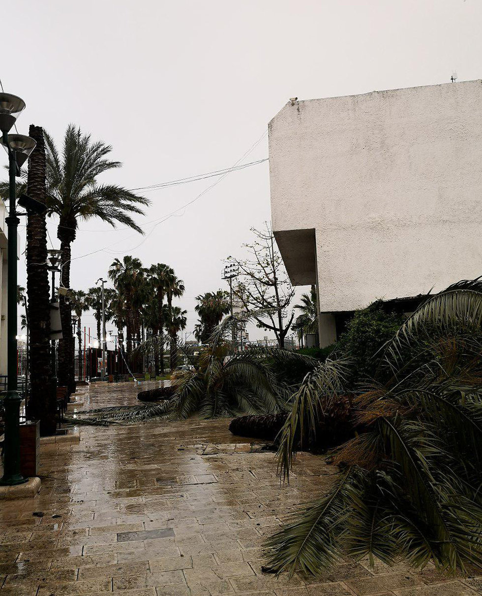 Collapsed trees in Tel Aviv (Photo: Hila Benaim)