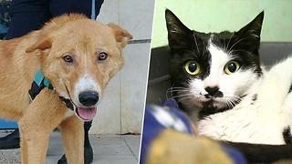 כלב וחתול לאימוץ (צילום: צער בעלי חיים רמת גן | חיים שוורצנברג, צער בעלי חיים בישראל - ת