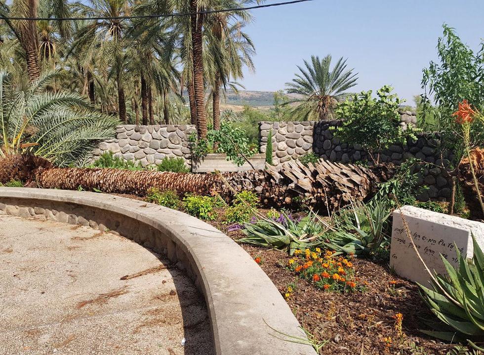 דקל קרס בסערה במועצה אזורית בקעת הירדן (גדי מאירי)