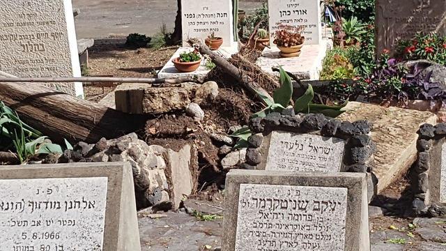 דקל קרס בסערה במועצה אזורית בקעת הירדן (דוברות המועצה האזורית עמק הירדן)