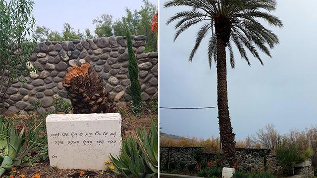 דקל שפל צמרת קרס נפל סערה  מועצה אזורית בקעת הירדן בית עלמין אנדרטה רחל ה משוררת ()