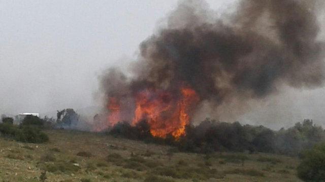 שריפה בכרמל  (צילום: קבוצת החדשות)