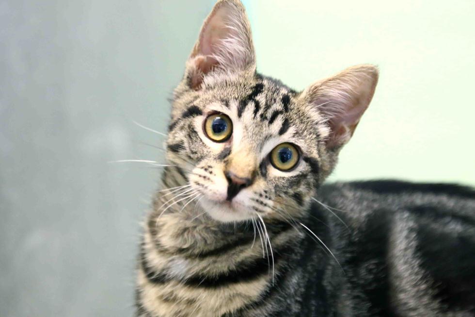 חתול כלב לאימוץ (צילום: חיים שוורצנברג, צער בעלי חיים בישראל - ת