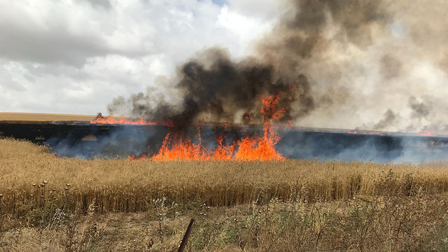 Severe damage to farmers' fields amid kite terror (Photo: Ziv Copperstein)