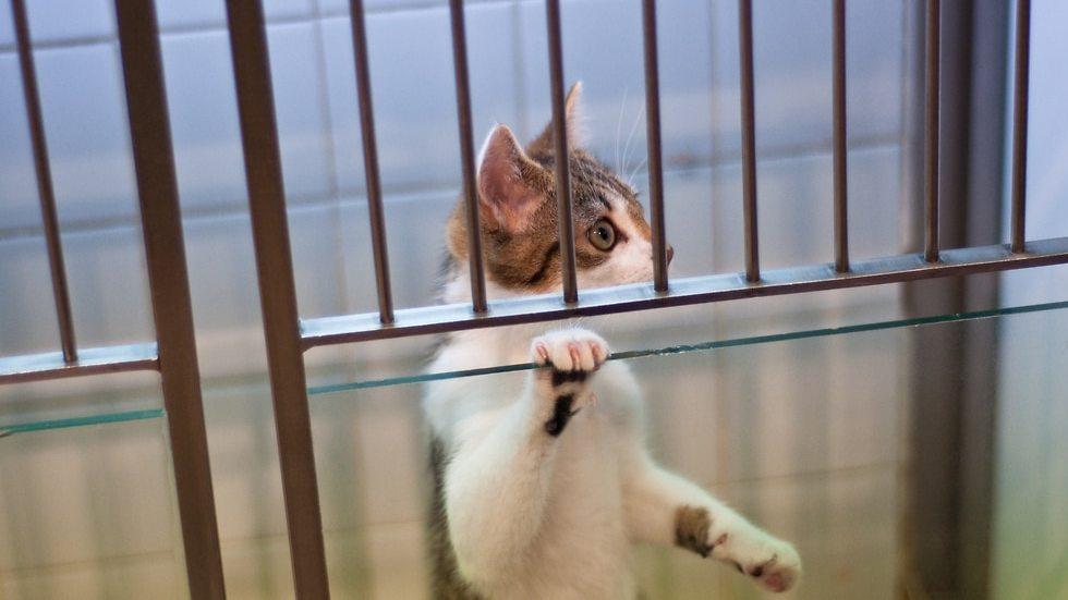 חתול במעבדה (צילום: shutterstock)