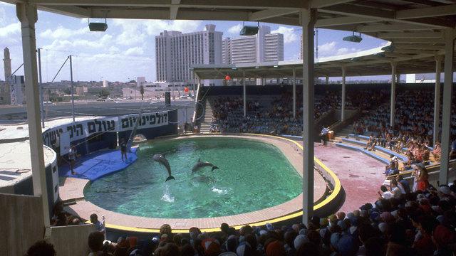 """Дельфинарий в 1981 году. Фото: Яаков Саар, """"Лаам"""""""