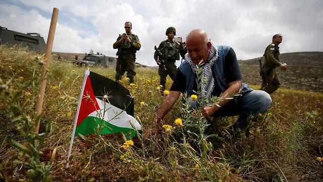 Palestinians plant 15 million olive trees (file photo) (Photo: Reuters)