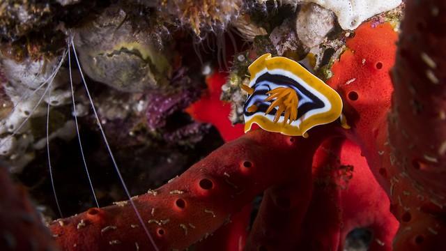 אלמוגים (צילום: חגי נתיב, תחנת מוריס קאהן לחקר הים, אוניברסיטת חיפה)