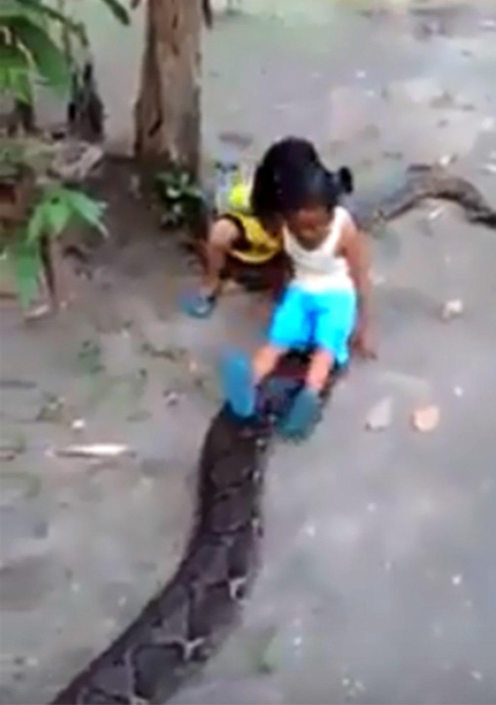 אינדונזיה ילדים רוכבים על נחש פיתון ענק ()