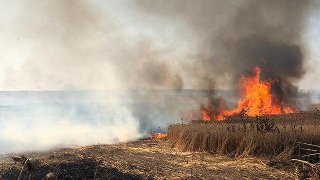 שריפה בקיבוץ עלומים (צילום: ידידה הרוש/TPS)